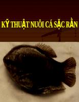 Tài liệu Bài giảng Kỹ thuật nuôi cá sặc rằn trong ao đất.pdf