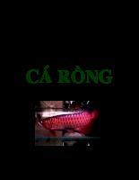 Tài liệu Tài liệu nuôi dưỡng cá Rồng.pdf