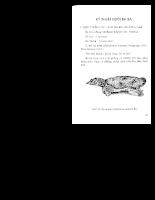 Tài liệu Kỹ thuật Nuôi Ếch Cua Baba Nhím Trăng - phan 6.pdf