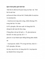 Quá trình phân giải tinh bột