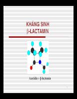 Kháng sinh B-lactamin