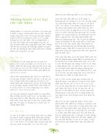 Điều tra quốc gia về vị thành niên và thanh niên Việt Nam tại 43 tỉnh thành (SAVI) năm 2003 - Bộ Y tế_ phần 2 chương8