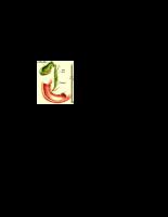 Lọc sạn gan và sỏi mật bằng biện pháp tự nhiên, ngăn chặn nguy cơ tắc ống dẫn mật bởi sỏi mật, hoặc tiểu đường do tắc ống ẫn illsulin