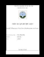 Tổng quan tài liệu về cây Coca - Erythroxylum coca Lamb.