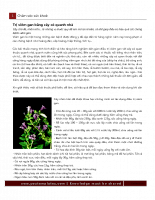 Trị viêm gan bằng cây cỏ quanh nhà