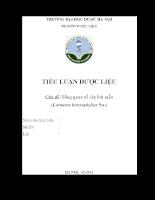 Tổng quan tài liệu về cây Ích mẫu - Leonurus heterophyllus
