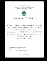 Đánh giá tình trạng nhiễm bệnh virus (Cucumber Mosaic Virus, Tobacco Mosaic Virus và Tomato Spotted Wilt Virus) trên cà chua (Solanum lycopersicum) ở tỉnh Lâm Đồng bằng kỹ thuật ELISA và bước đầu xây dựng quy trì
