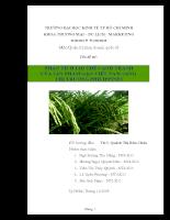 Phân tích lợi thế cạnh tranh của sản phẩm gạo Việt Nam sang thị trường Philippines