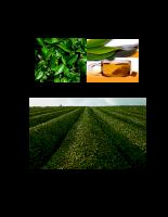 Nghiên cứu quy trình trồng, thu hoạch và công nghệ chế biến, bảo quản một số loại chè (trà) quý