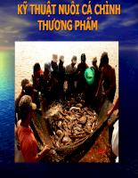 Báo cáo chuyên đề tìm hiểu về cá chim