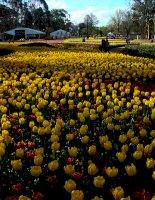 6 lễ hội mùa xuân hấp dẫn nhất thế giới