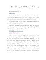 Tài liệu Kỹ thuật trồng cây Dó bầu tạo trầm hương doc