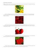 Tài liệu Dinh dưỡng từ thiên nhiên pptx