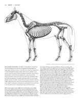 Tài liệu Figure Drawing - Horse docx