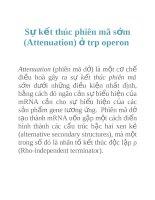 Tài liệu Sự kết thúc phiên mã sớm (Attenuation) ở trp operon ppt
