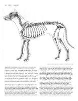 Tài liệu Figure Drawing - Dog doc