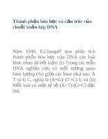 Tài liệu Thành phần hóa học và cấu trúc của chuỗi xoắn kép DNA pptx