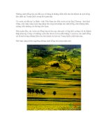 Tài liệu Những cánh đồng hoa cải dầu rực rỡ đang là những điểm đến thu hút khách du lịch đông đảo nhất tại Trung Quốc trong thời gian này doc