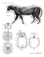 Tài liệu Figure Drawing - Feline and Domestic Cat ppt