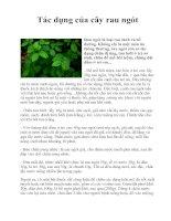 Tài liệu Tác dụng của cây rau ngót doc