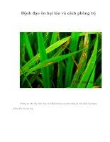 Tài liệu Bệnh đạo ôn hại lúa và cách phòng trị ppt