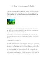 Tài liệu Sử dụng Ozone trong nuôi cá cảnh docx