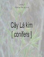 Tài liệu Chương 5 Phân loại Thực vật cơ sở Cây Lá kim ppt