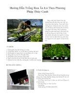 Hướng dẫn trồng rau ăn lá theo phương pháp thủy canh