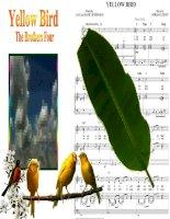 Bài giảng Yellow Bird