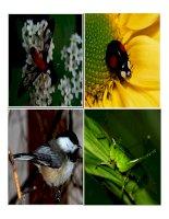 Tài liệu Cảm ứng ở động vật ( tiết 1) pptx