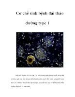 Tài liệu Cơ chế sinh bệnh đái tháo đường type 1 pdf