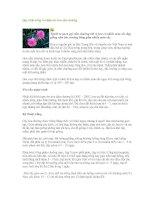 Tài liệu Quy trình trồng và chăm sóc hoa cẩm chướng ppt