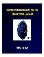 Tài liệu Cấu trúc sinh học phân tử của HBV - Ý nghĩa lâm sàng docx