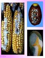 Bài giảng dinh dưỡng và chuyển hóa vật chát ở vi sinh vật