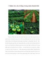 Tài liệu Chăm sóc cây trồng trong mùa hanh khô ppt