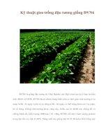 Tài liệu Kỹ thuật gieo trồng đậu tương giống ĐVN6 docx