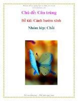 Tài liệu Chủ đề: Côn trùng - Đề tài: Cánh bướm xinh Nhóm - Lớp: Chồi ppt