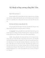 Tài liệu Kỹ thuật trồng xương rồng Bát Tiên docx