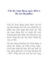 Tài liệu Chu kỳ hoạt động ngày đêm ở Bò sát (Reptilia) pdf