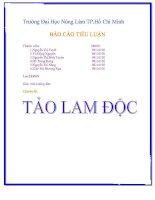 Tài liệu Báo cáo tiểu luận Tảo Lam Độc doc