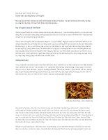 Tài liệu Chữa đau dạ dày theo cổ truyền docx