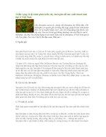 Tài liệu Triển vọng và lộ trình phát triển cây Jatropha để sản xuất diesel sinh học ppt