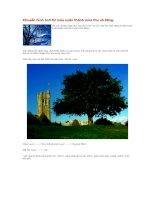 Tài liệu Chuyển hình ảnh từ mùa xuân thành mùa thu và đông doc