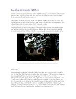 Tài liệu Đẹp sững sờ rừng cấm Nghi Sơn Quảng Nam pdf