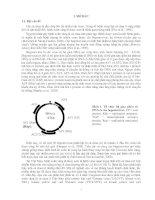 Tài liệu Báo cáo Sinh viên nghiên cứu khoa học docx