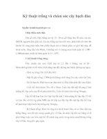 Tài liệu Kỹ thuật trồng và chăm sóc cây bạch đàn doc