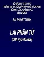 Tài liệu Bài thuyết trình Lai phân tử docx