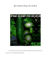 Tài liệu Kỹ thuật trồng cây bí đao pdf