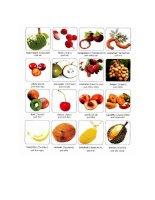 Vocabulary fruit