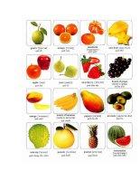 Các loại hoa quả bằng tiếng anh